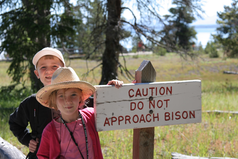 caution bison